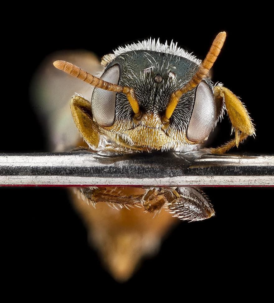 albină pentru vedere pentru ochi