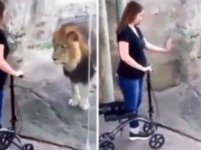 leul și vederea lui