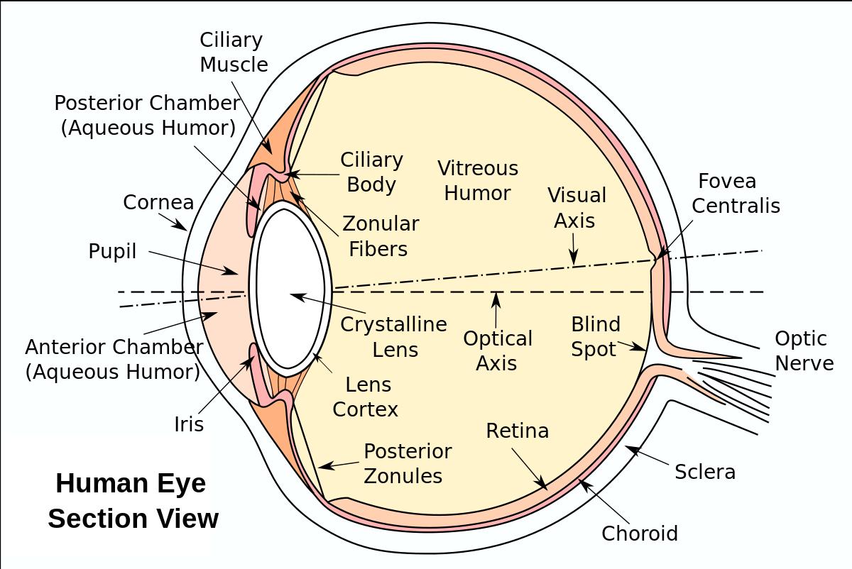 schema optică miopie