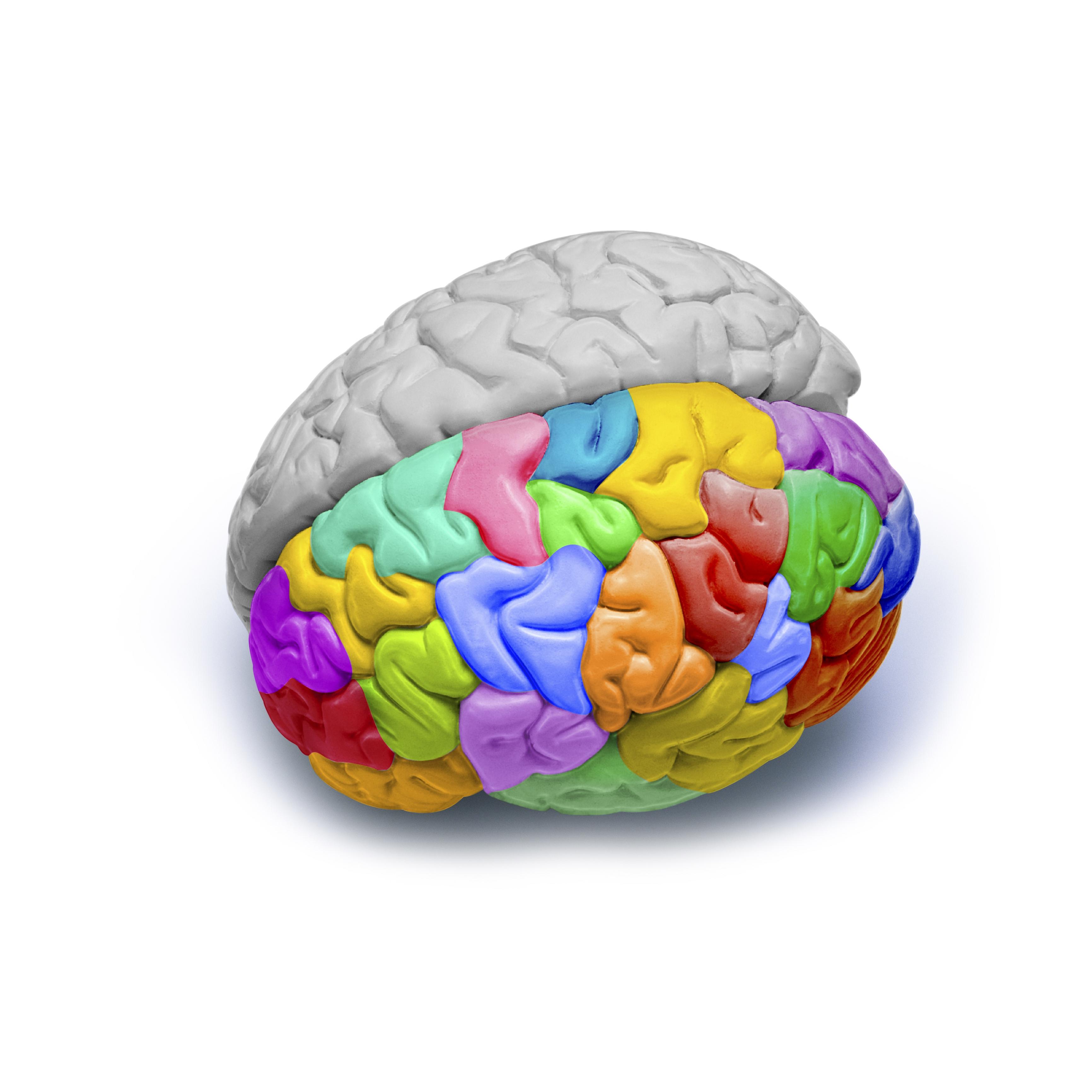 creierul responsabil de vedere
