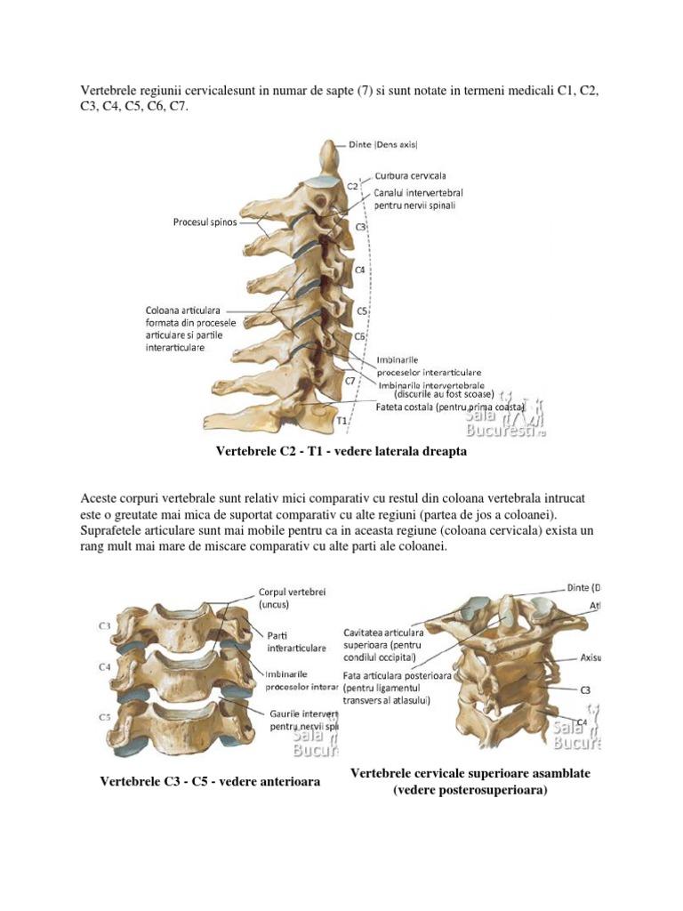 vertebre și vedere)