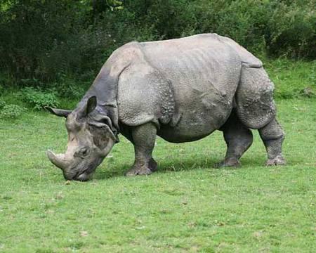 Război între clanuri pentru cornurile de rinocer   Epoch Times România