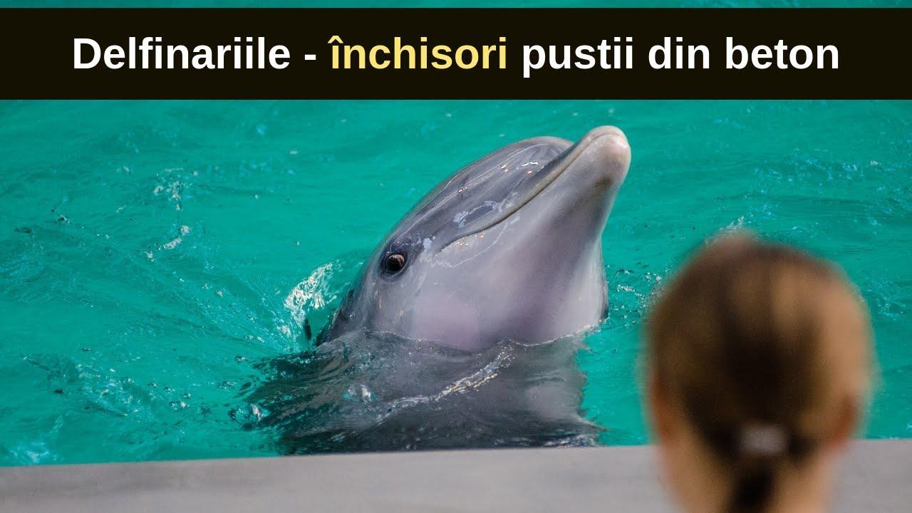 delfin ce viziune)