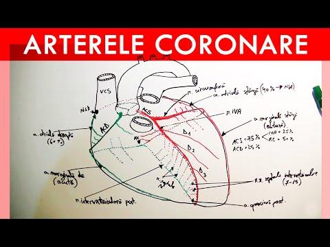 Ce simptome are ateroscleroza, in functie de arterele blocate sau ingustate