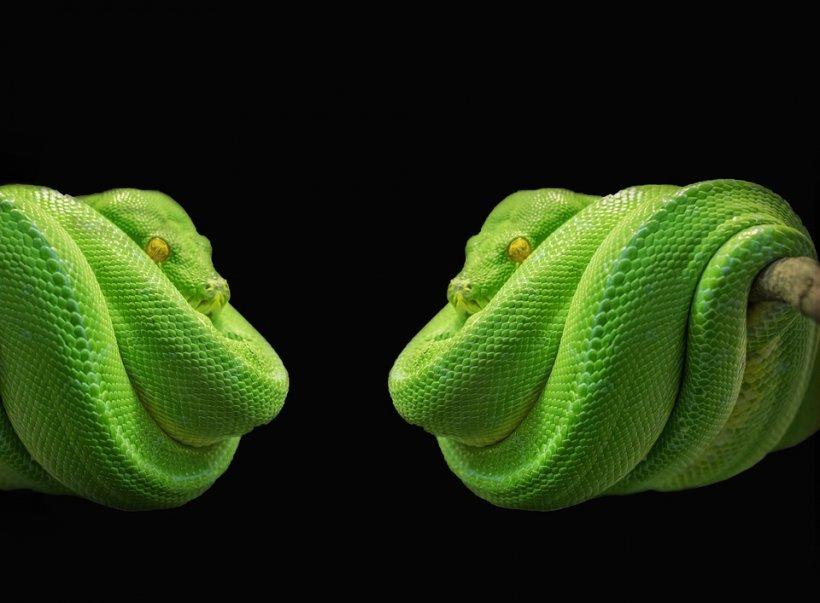 vedere ca un șarpe)