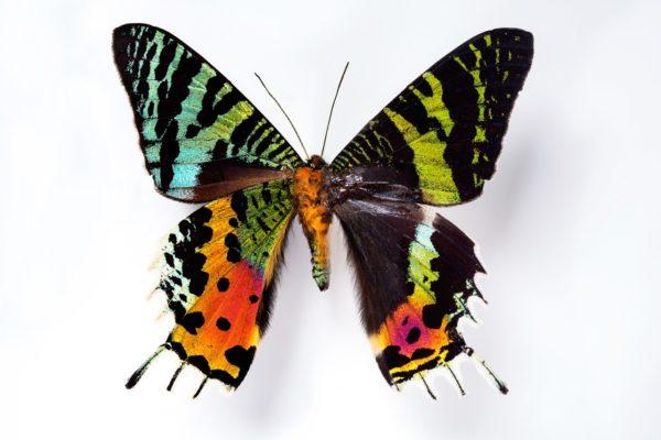 care este viziunea fluturilor