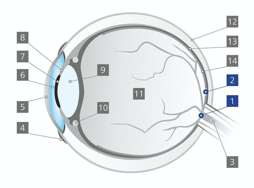 cercuri de distorsiune a vederii