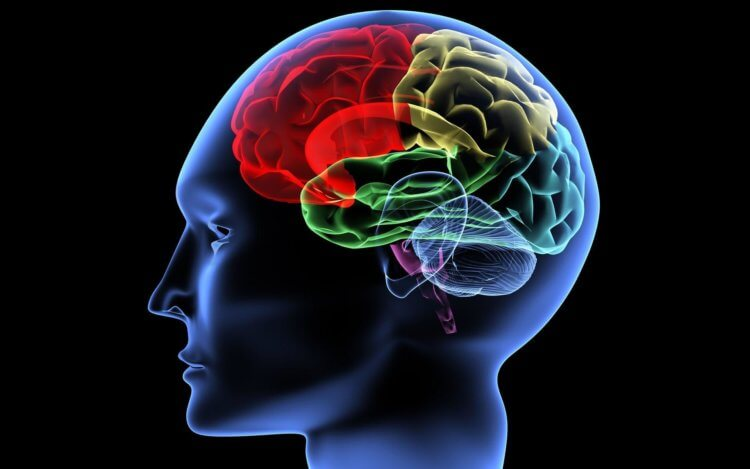 Un neurolog vrea să-și încarce tot creierul într-un calculator