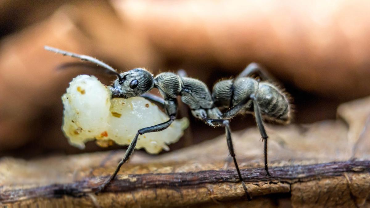 furnicile au vedere