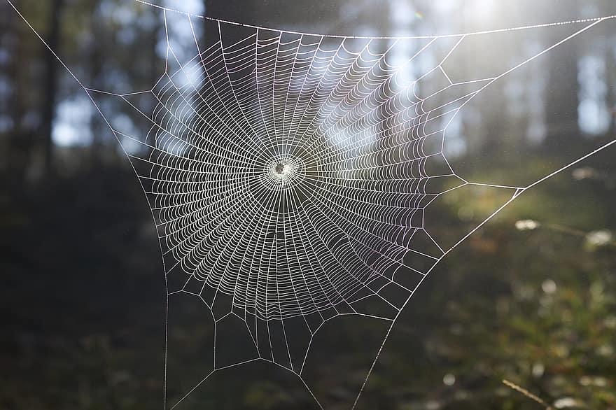 pânză de păianjen pentru vedere)