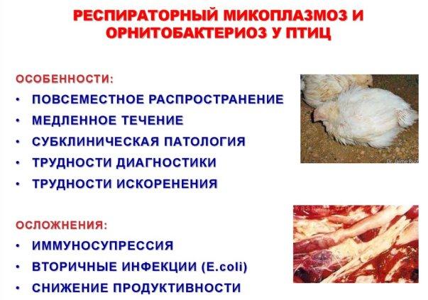puii au boli ale vederii)