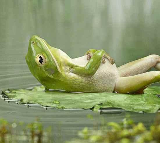 viziune la amfibieni