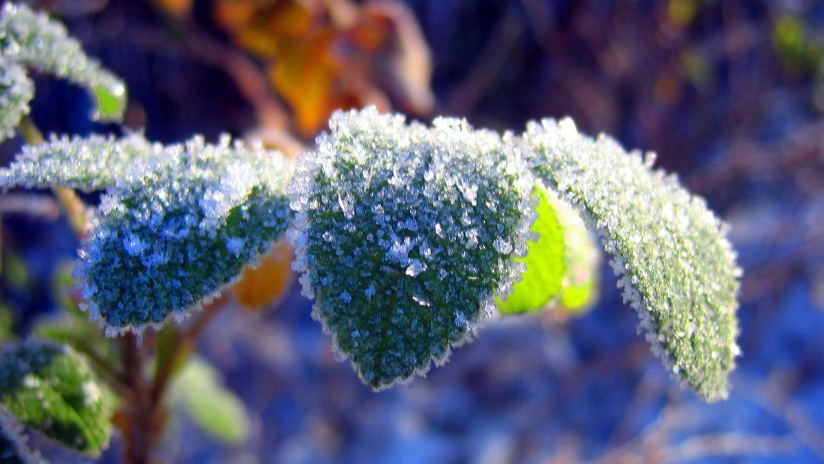 viziunea la îngheț